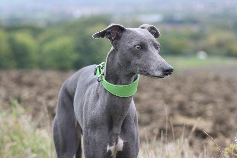 Характеристика собак породы шипперке с отзывами и фото