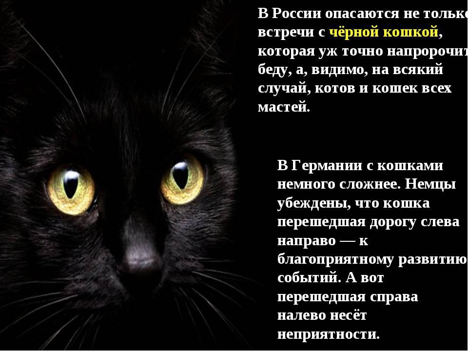 К чему чужая кошка пришла в дом? примета :: syl.ru