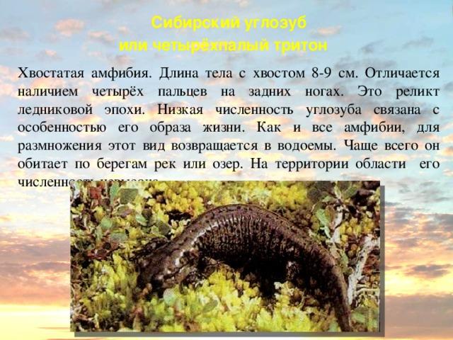 Сибирский углозуб: как выглядит, где обитаем, чем питается и интересные факты (фото)