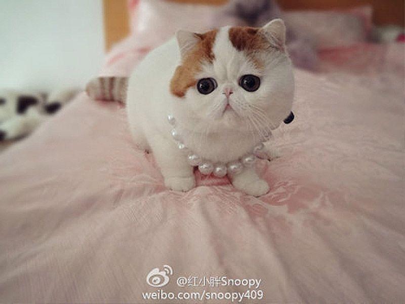 Топ-10 самых красивых пород кошек в мире