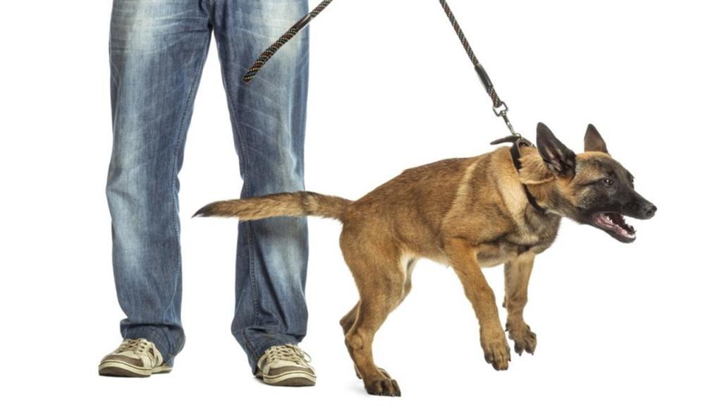 Как воспитать собаку, неприбегая кнасилию? 6полезных кинологических секретов