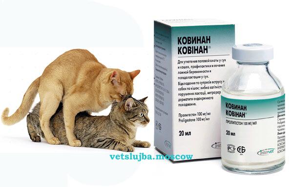 Ковинан для кошек: инструкция по применению, аналоги, отзывы