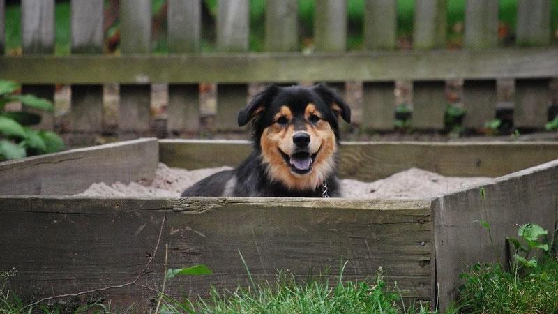 Собака роет ямы: причины и как ее отучить