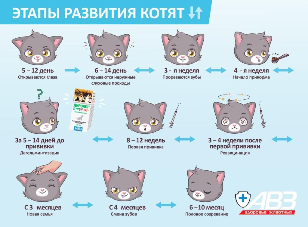 Как меняется окрас кота