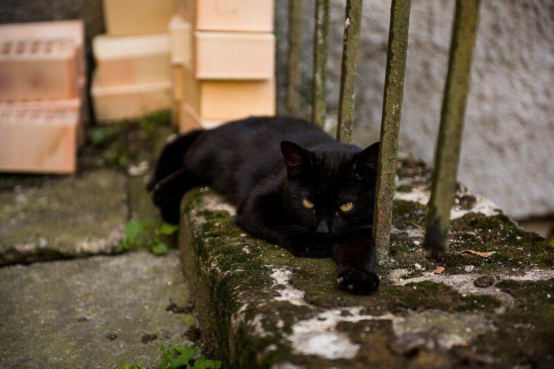 Как понять кот уличный или домашний
