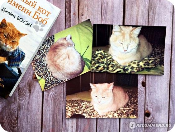 Породы кошек для двора