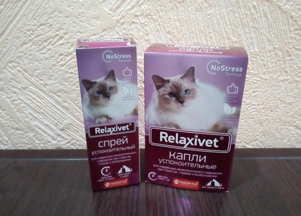 Успокоительное и снотворное для кошек