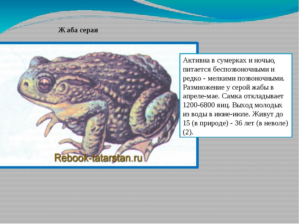 Земляные жабы в огороде вред или польза. как избавиться от земляной жабы | дачная жизнь