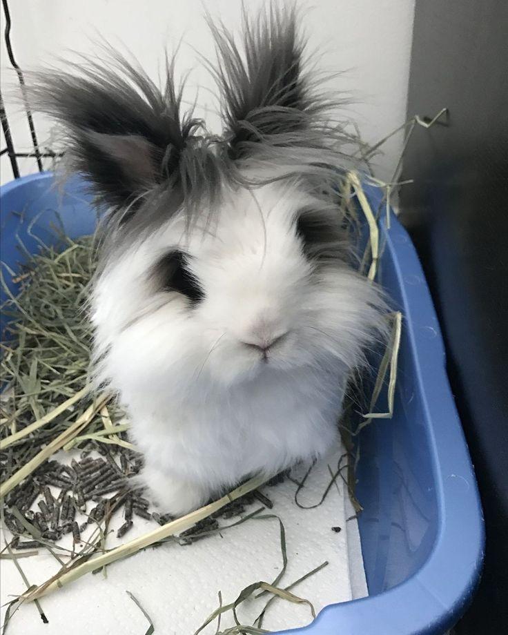 Как ухаживать за кроликами и чем их кормить. советы ветеринара.