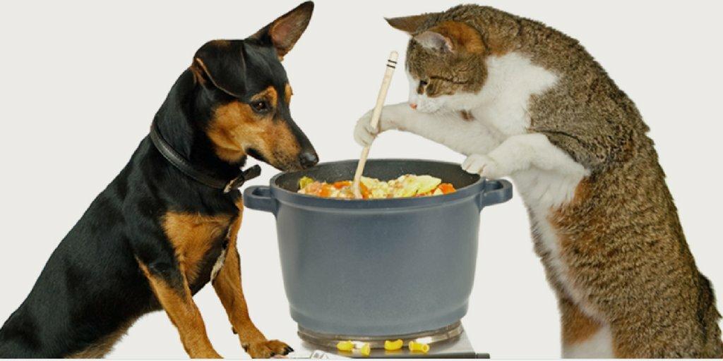 Как кормить кошку самостоятельно: обзор разных типов кормов для животного