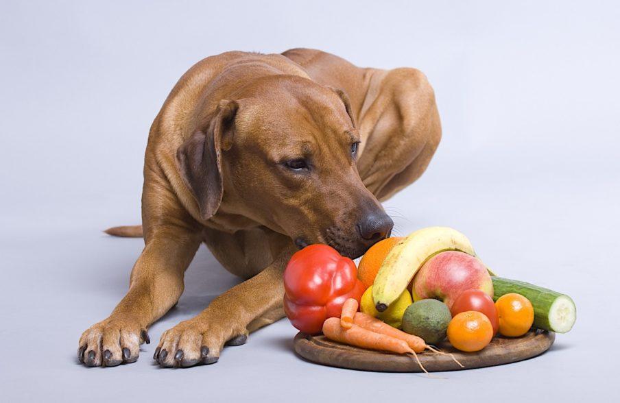 Натуральное кормление собак по весу и возрасту