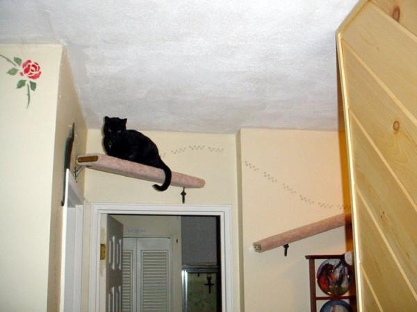 Как избавиться от кошек во дворе частного дома навсегда