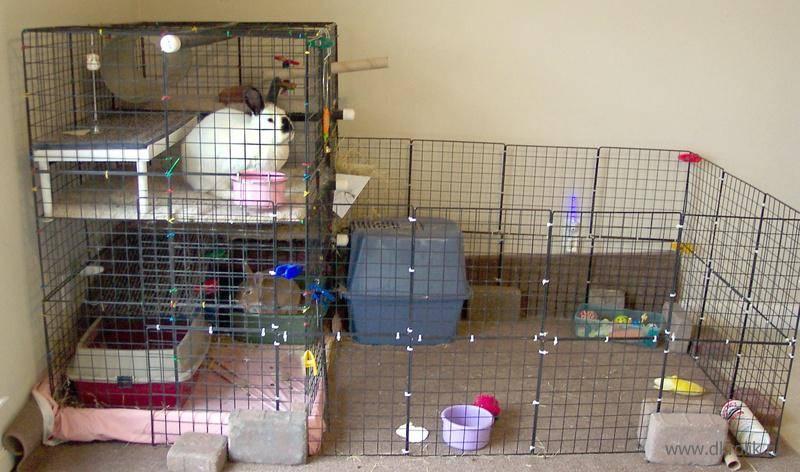 Как ухаживать за кроликами: декоративные и карликовые кролики, уход за ними и содержание