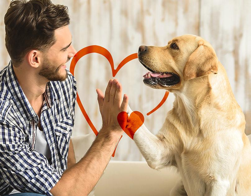 Собака лижет ноги и лицо хозяина — причины и способы коррекции поведения