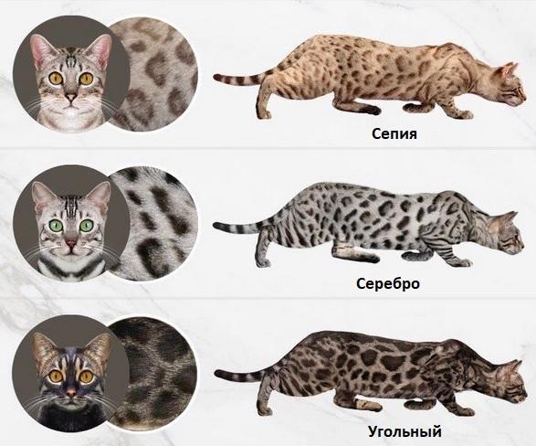 Окрас табби у кошек: раскрываем все тайны