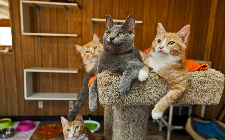 Кого лучше завести: кота или кошку - особенности поведения, характера и отзывы владельцев :: syl.ru
