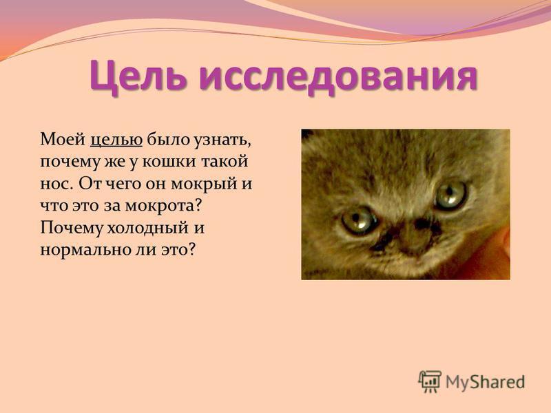 Чем лечить расчесы у кошки – постановка диагноза, причины расчесов и их лечение