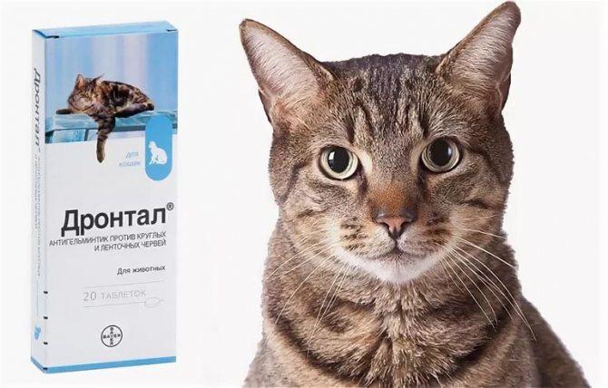 Дронтал для кошек – обзор препарата