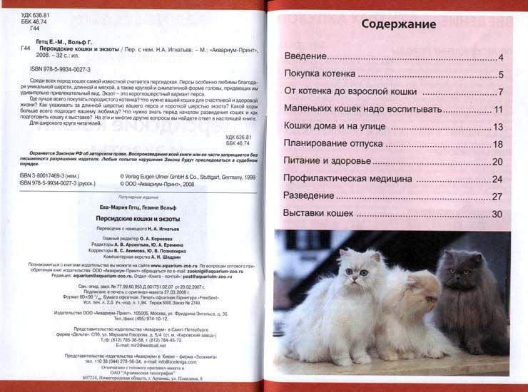 Кошка сомали: описание породы, особенности характера и отзывы :: syl.ru