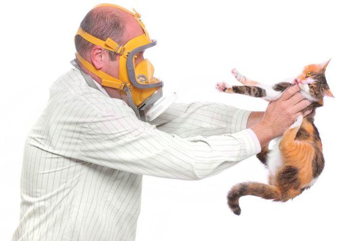 Все об аллергии у кошек - причины, симптомы и обзор лучших лечебных кормов