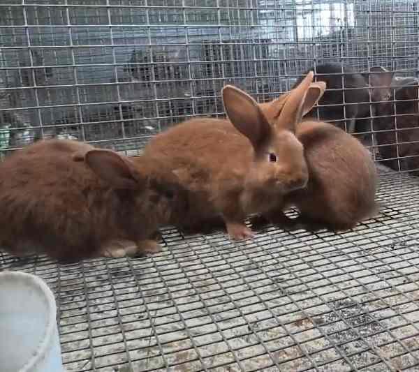 Почему крольчиха разбрасывает крольчат: причины и методы решения