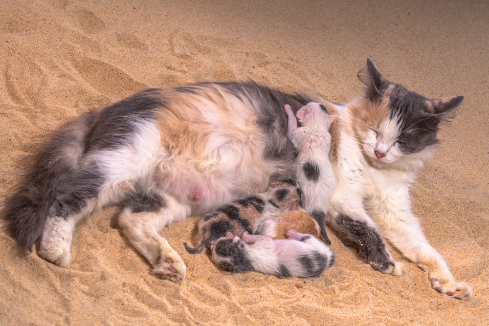 Сколько котят может родить кошка в первый раз?