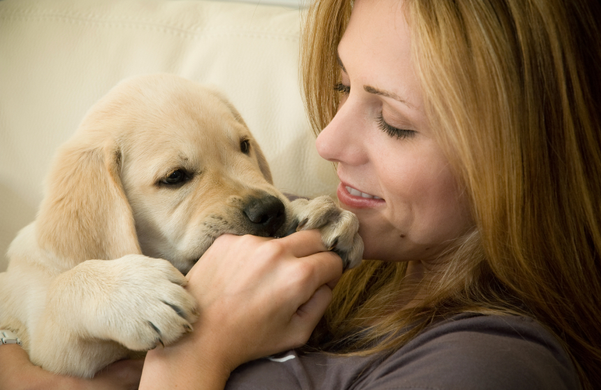 ᐉ как отучить щенка кусаться - ➡ motildazoo.ru