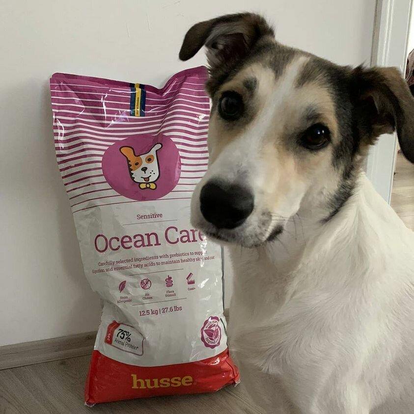 Преимущества влажного корма для собак | hill's