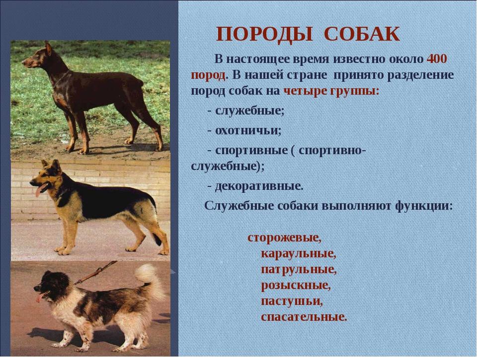 Характеры 7 классов пород для подбора собаки по характеру   hill's pet