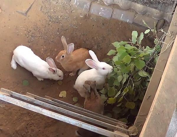 Технология и способы разведения кроликов в домашних условиях на продажу + полезные советы для владельцев кроликоферм