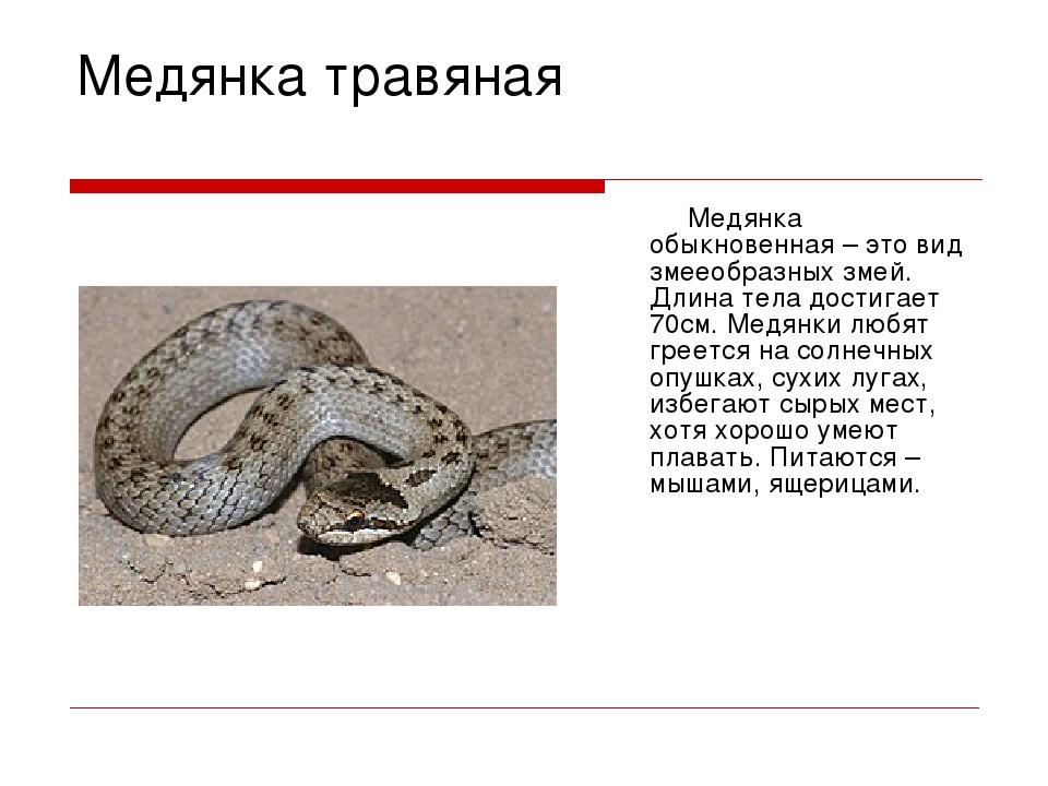 Медянка змея. образ жизни и среда обитания медянки | животный мир