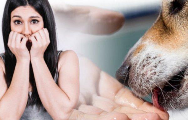 Почему собака вылизывает хозяина | человека, руки и ноги