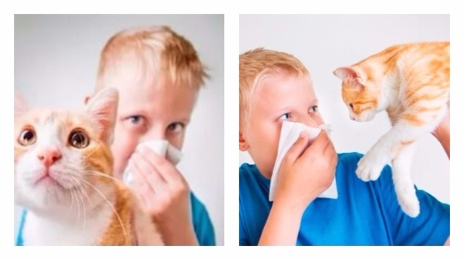 Аллергия на коже у взрослых