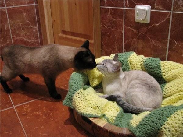 Как правильно подготовить и свести кошку с котом
