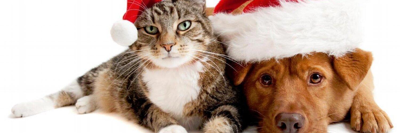 Как помочь кошке пережить утрату животного-компаньона?   hill's pet