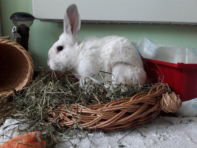 Как ухаживать за декоративным кроликом в домашних условиях