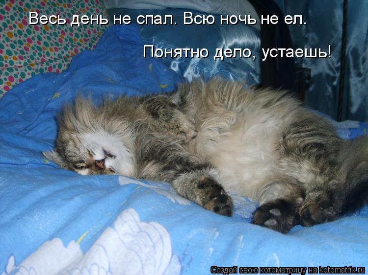 Что делать, если кошка не дает ночью спать