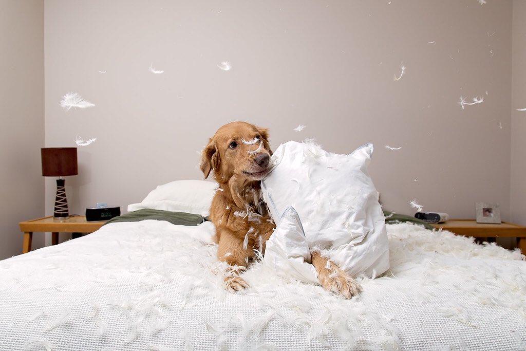 Что делать если собака гадит на кровать? - про друга