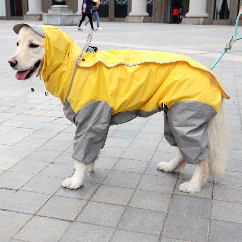 17 шлеек для собак разных пород, названия с фото и описаниями