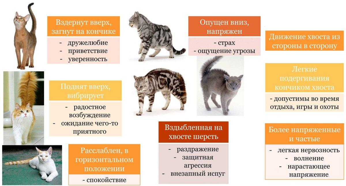 Агрессивное поведение кошек во время еды