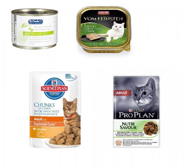Какие бывают классы кормов для кошек