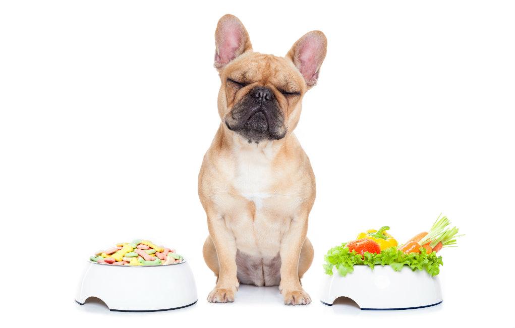 Чем кормить французского бульдога чем кормить французского бульдога