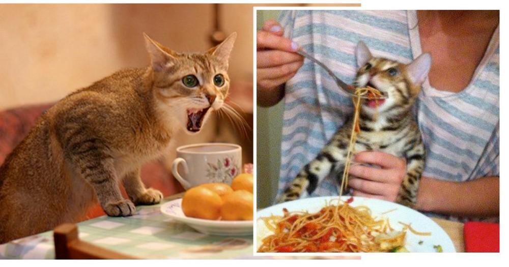 Что делать когда собака худеет при хорошем аппетите | вет005