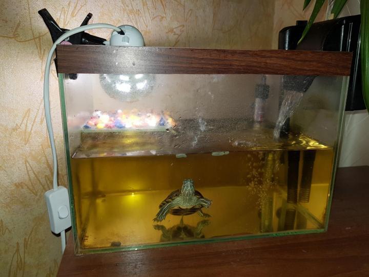 Аквариум для красноухой черепахи: советы и рекомендации аквариум для красноухой черепахи: советы и рекомендации
