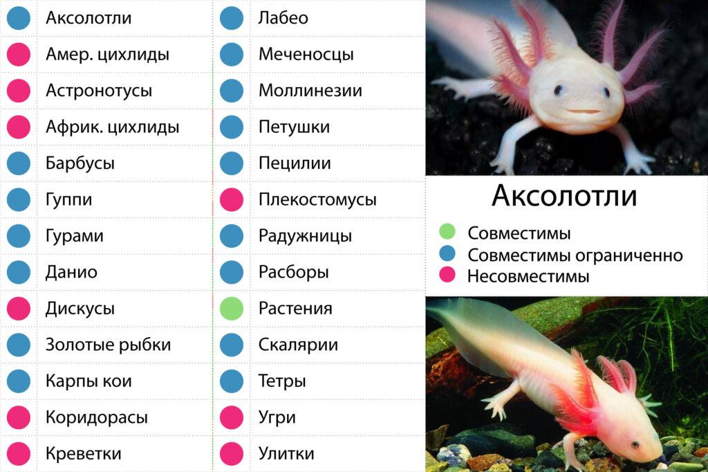 Тритоны в аквариуме: содержание и уход тритоны в аквариуме: содержание и уход