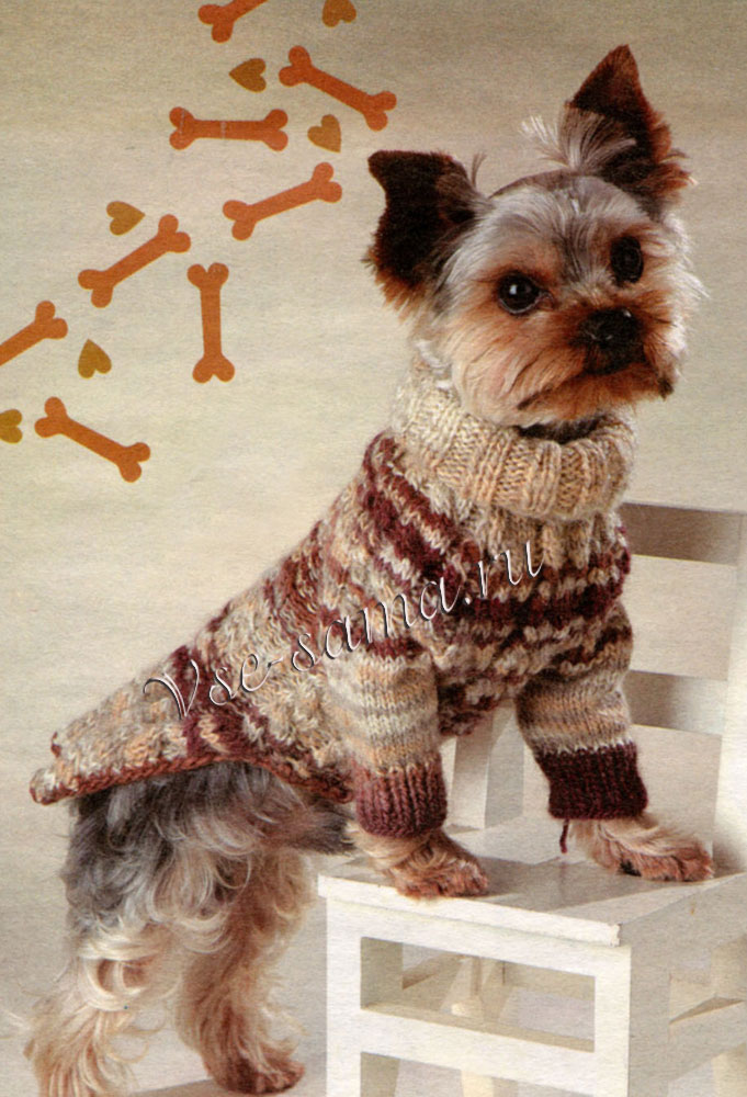 Вязаная одежда для собак своими руками: инструкция по изготовлению