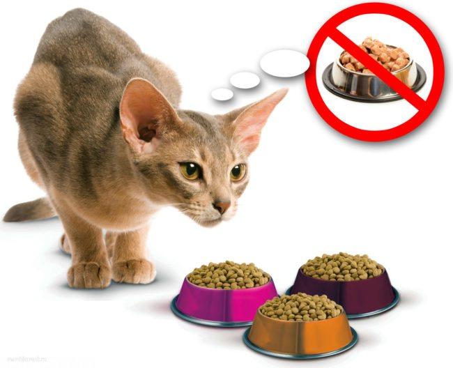 Кошка похудела. что делать?