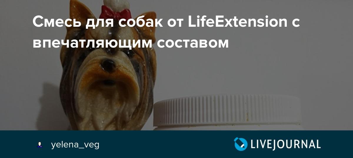 Как домашние животные продлевают нам жизнь на supersadovnik.ru
