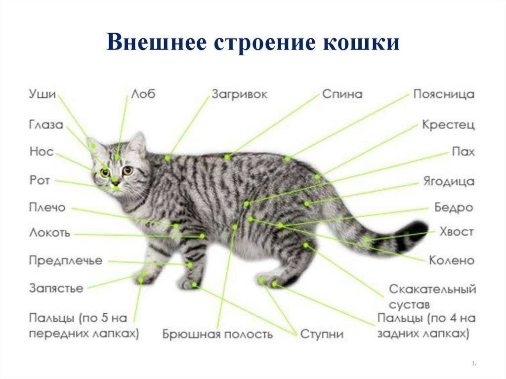 Какие запахи не любят кошки?