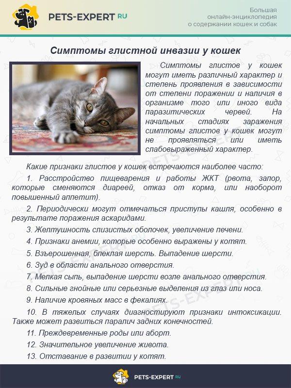Инфекционный перитонит кошек fip (впк, ипк)